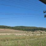 Schafherde im Harbachtal
