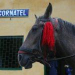 Nicht nur die Dampflok, auch Pferdestärken waren an diesem Wochenende gefragt